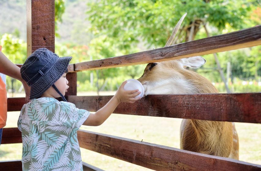 Child Feeding Animal